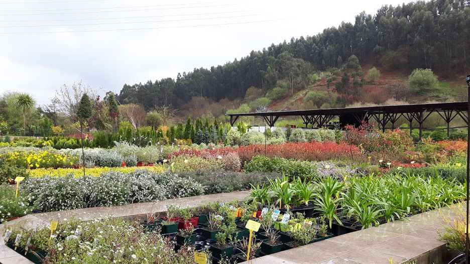 Comprar plantas de exterior en Getxo