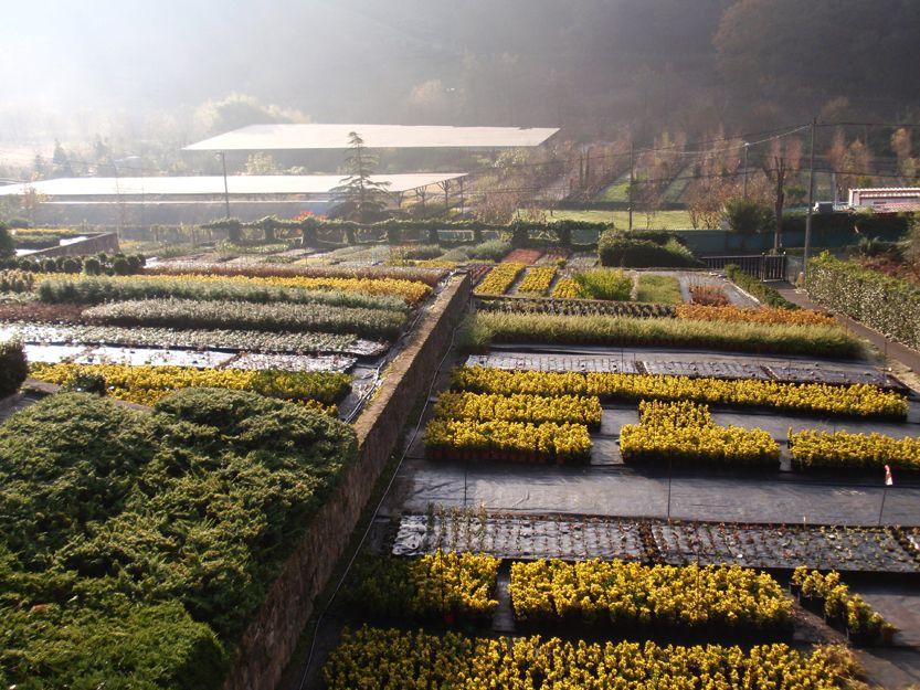 Plantas de producción propia