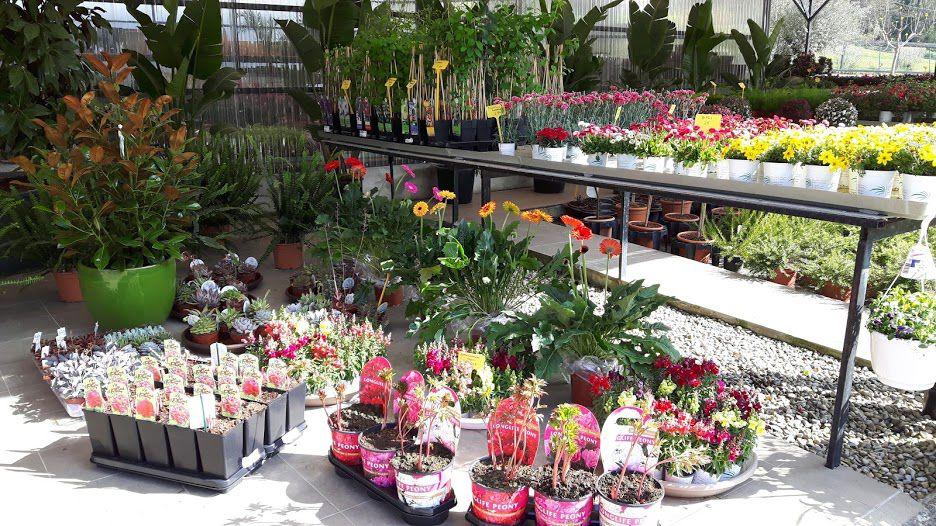 Viveros de jardinería en Vizcaya