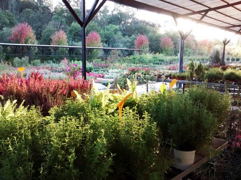 Plantas de interior y exterior en Getxo