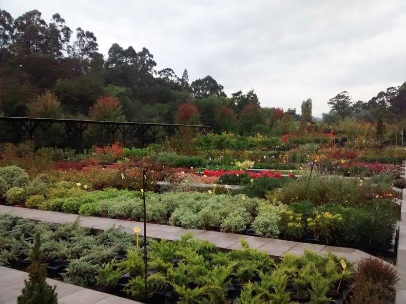 Comprar plantas de jardín en Getxo