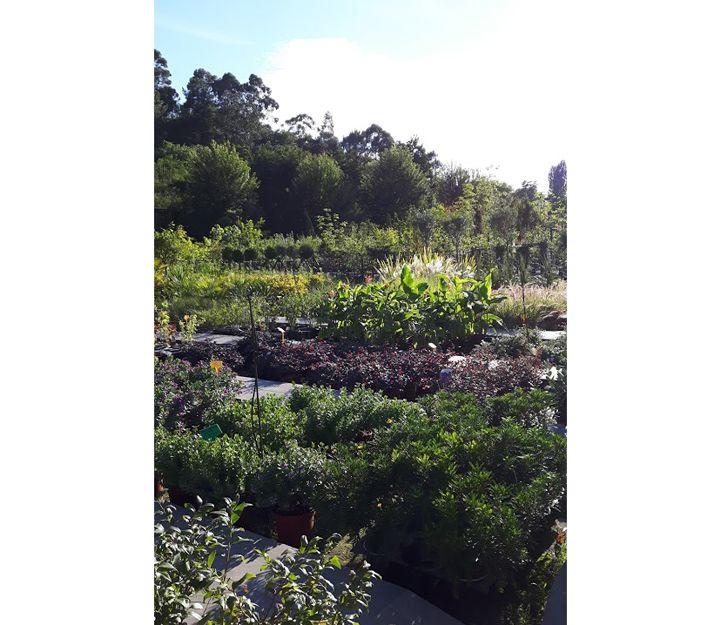 Arbustos para jardines en Getxo
