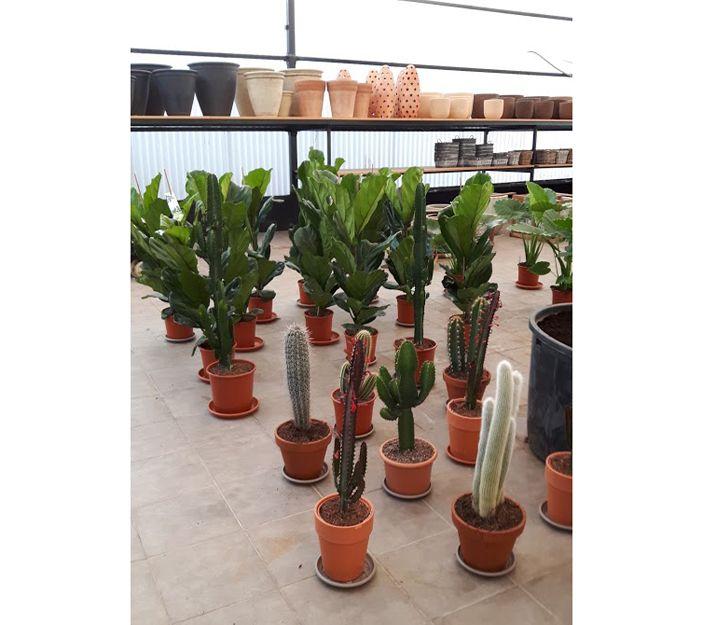 Plantas de interior en Getxo