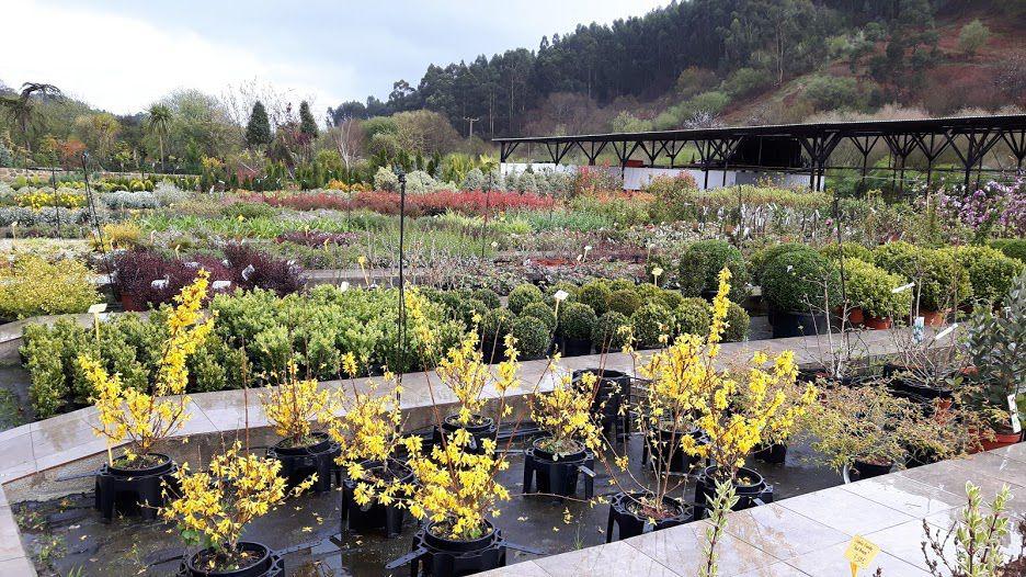 Vivero especializado en coníferas y arbustos en Getxo