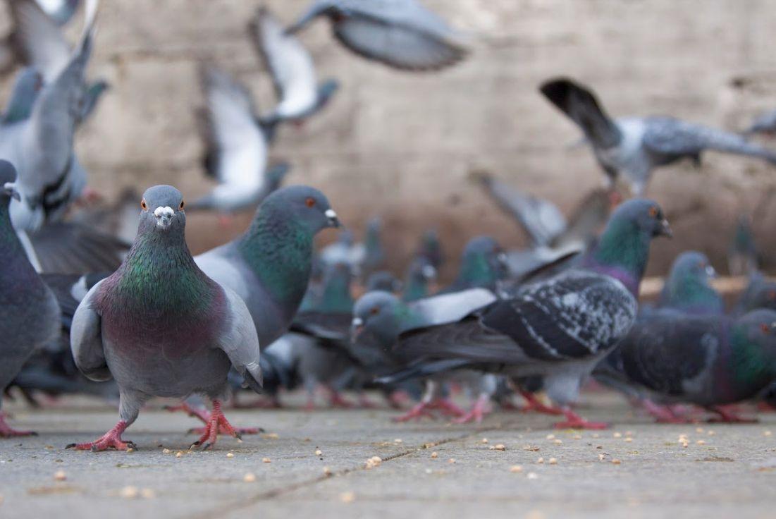Aves: Servicios de Control de Plagas Cejudo
