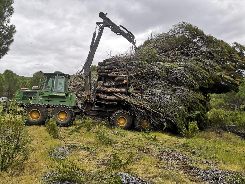 Foto 9 de Maderas en Bollullos Par del Condado | Explotaciones Forestales Lagarcía
