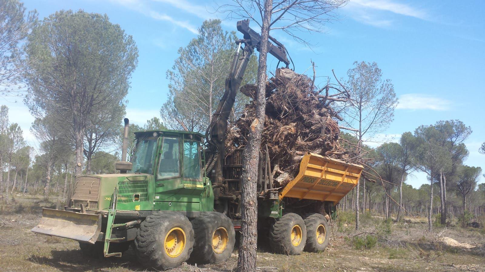 Limpeza de bosques