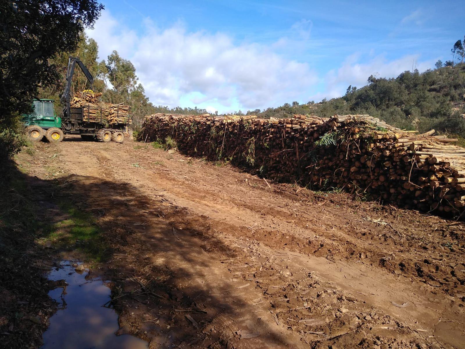 Limpieza de bosques