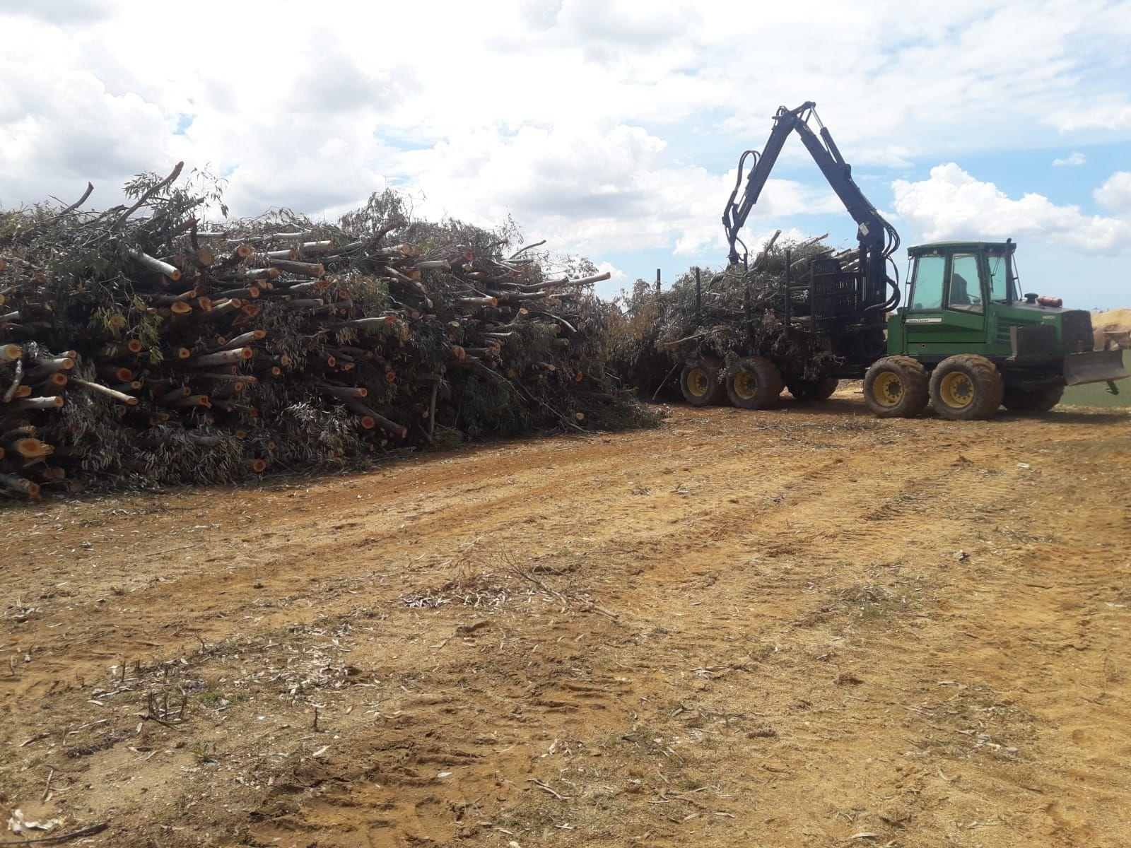 Foto 8 de Maderas en Bollullos Par del Condado | Explotaciones Forestales Lagarcía