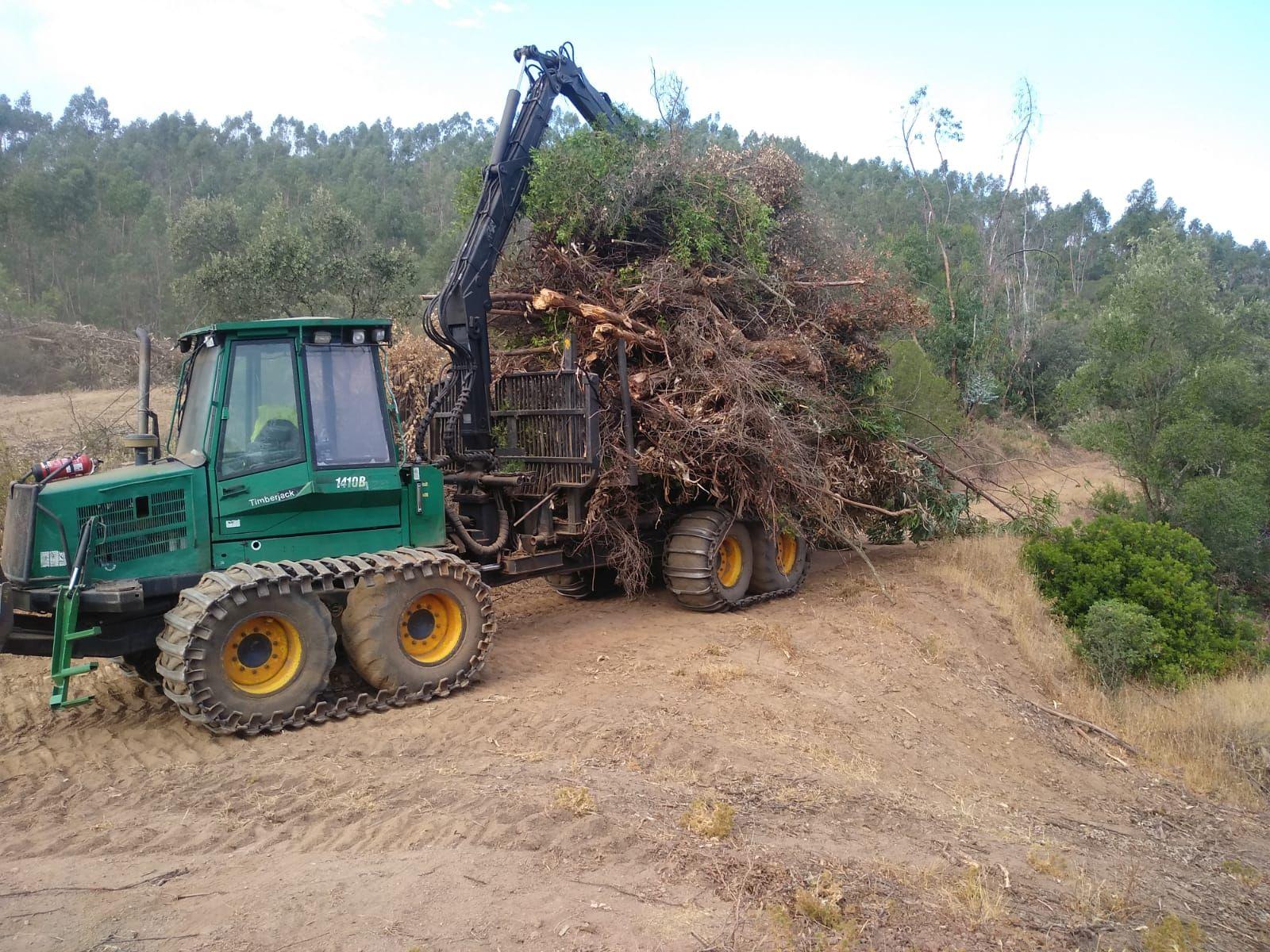 Foto 11 de Maderas en Bollullos Par del Condado | Explotaciones Forestales Lagarcía