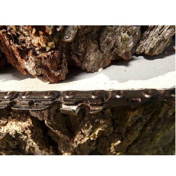 Tala de madera en pié: Servicios   de Explotaciones Forestales Lagarcía, S.L.L.