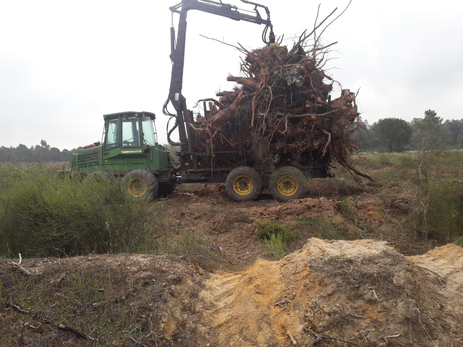Foto 12 de Maderas en Bollullos Par del Condado | Explotaciones Forestales Lagarcía