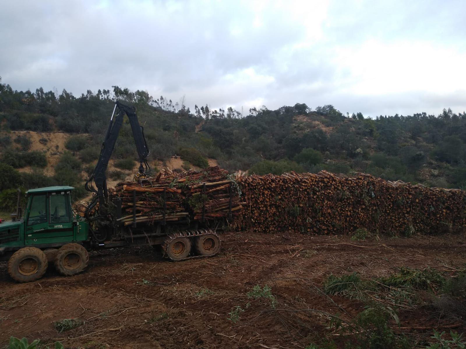 Foto 13 de Maderas en Bollullos Par del Condado | Explotaciones Forestales Lagarcía