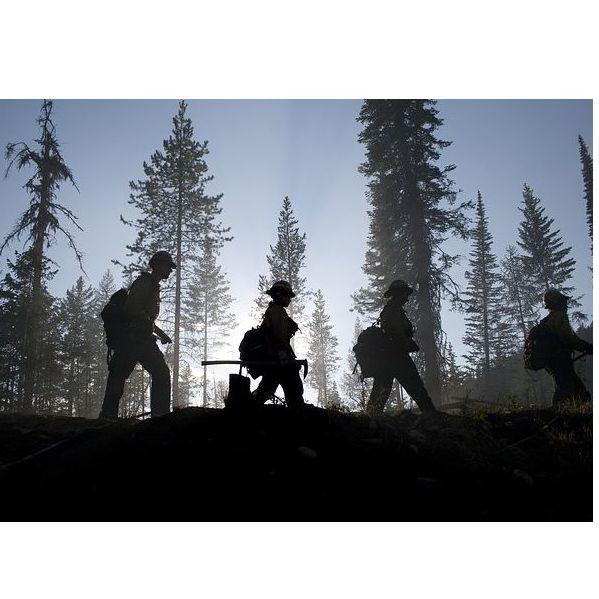 Tratamientos selvícolas : Servicios   de Explotaciones Forestales Lagarcía, S.L.L.