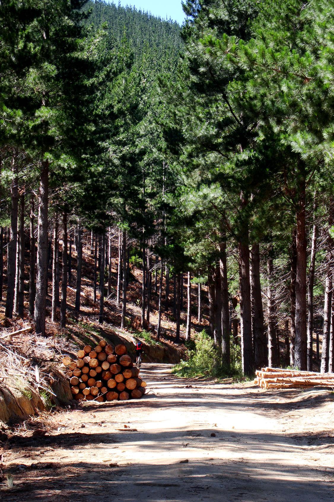 Foto 5 de Maderas en Bollullos Par del Condado | Explotaciones Forestales Lagarcía, S.L.L.