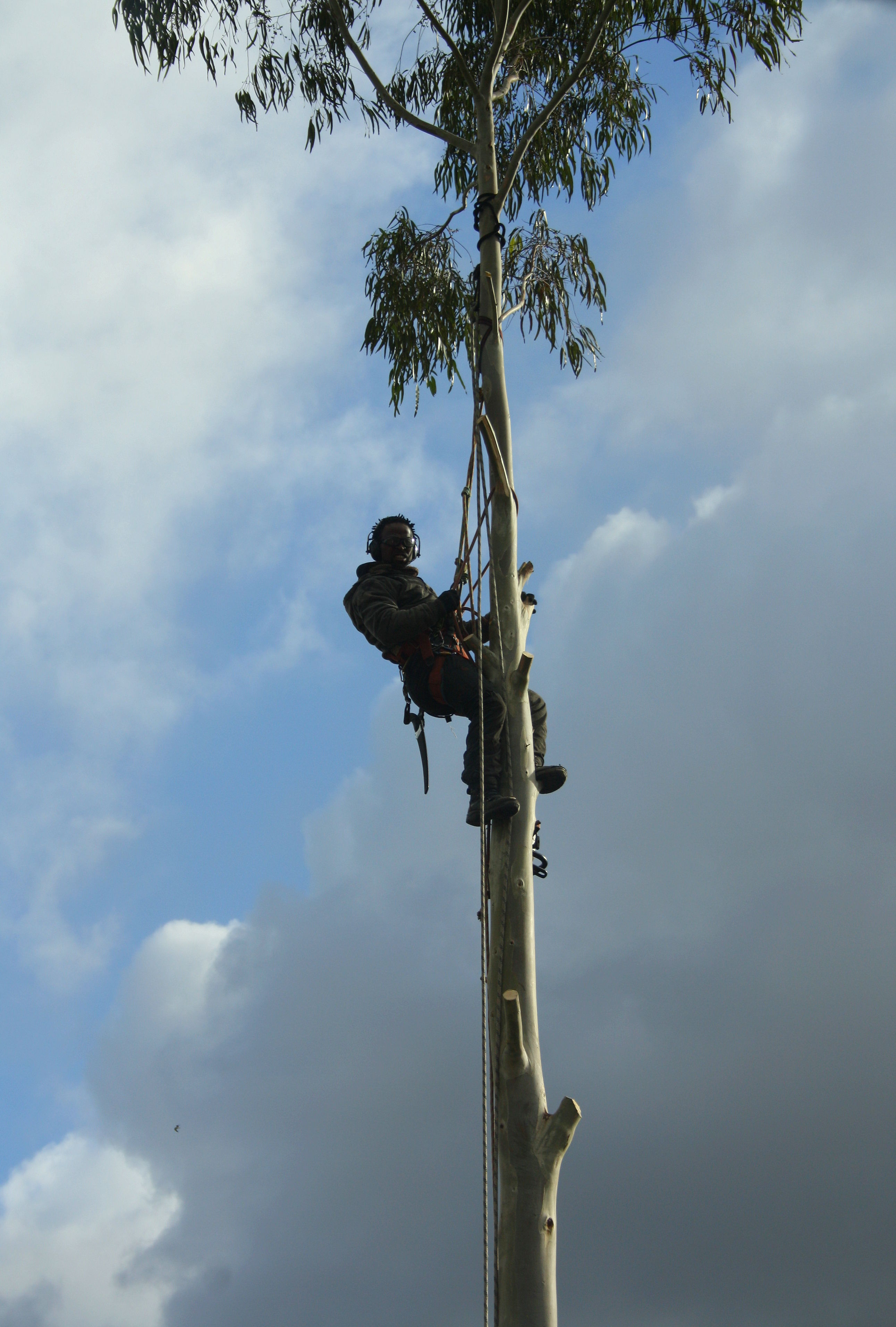 Foto 7 de Maderas en Bollullos Par del Condado | Explotaciones Forestales Lagarcía, S.L.L.
