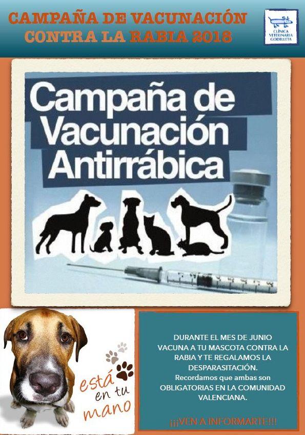 Foto 1 de Veterinarios en Godelleta | Clínica Veterinaria Godelleta