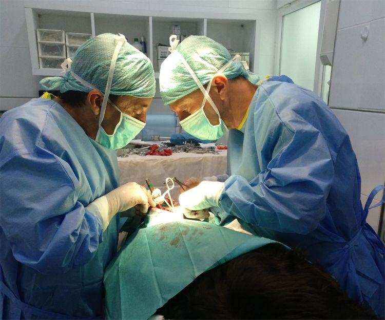 Veterinario de urgencia en Llíria, Valencia