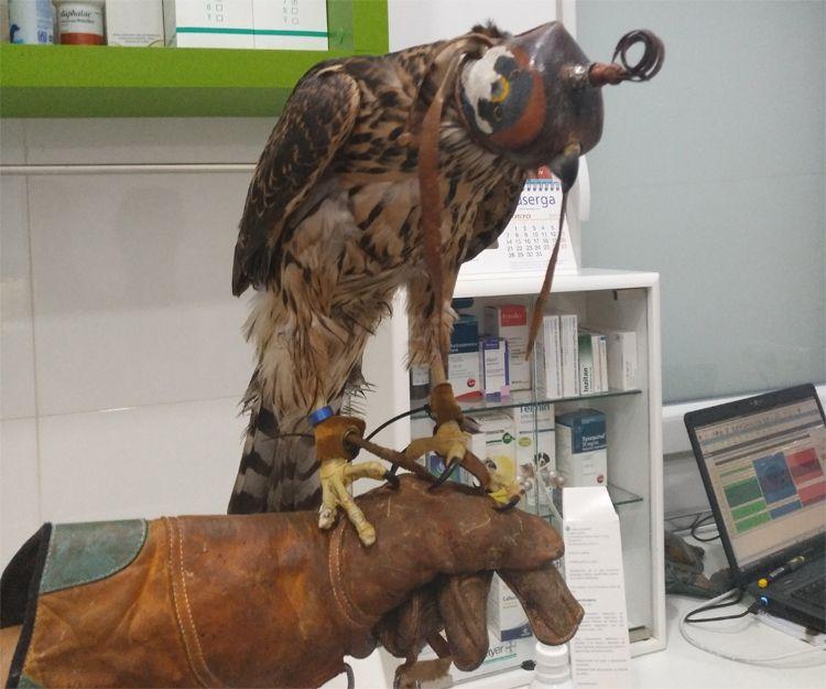 Diagnóstico de animales exóticos en Llíria, Valencia