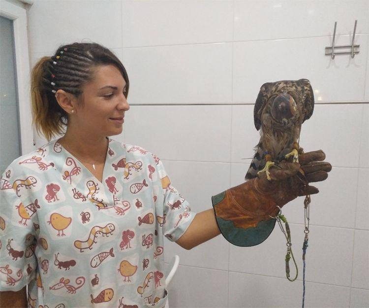 Diagnóstico y tratamientos de animales exóticos en Llíria, Valencia