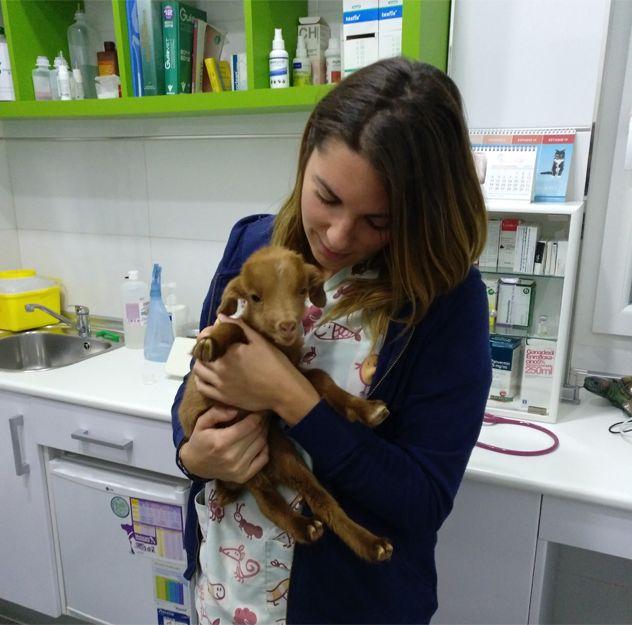 Centro veterinario en Llíria, Valencia