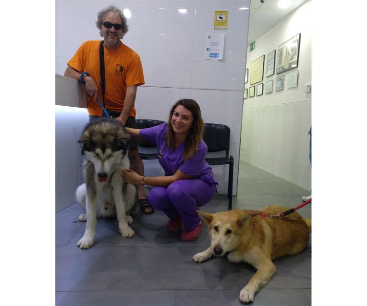 Centro veterinario en Llíria