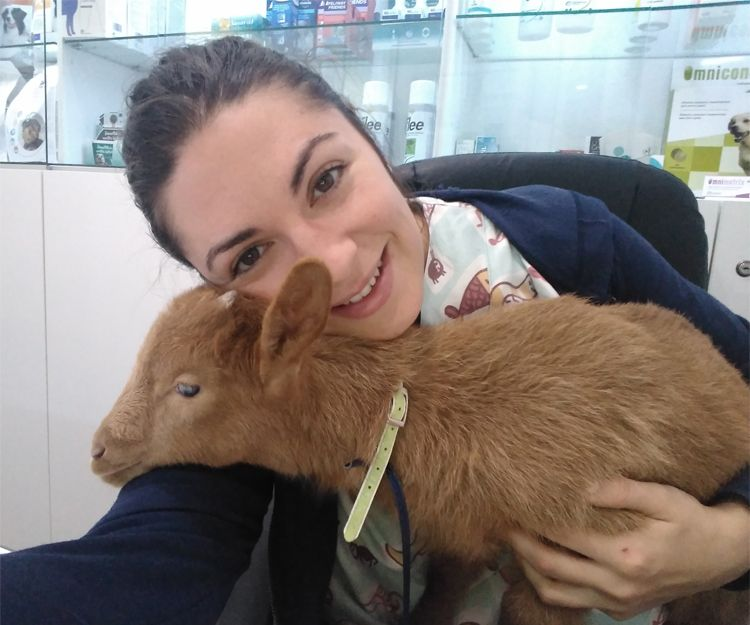 Veterinario en Llíria, Valencia