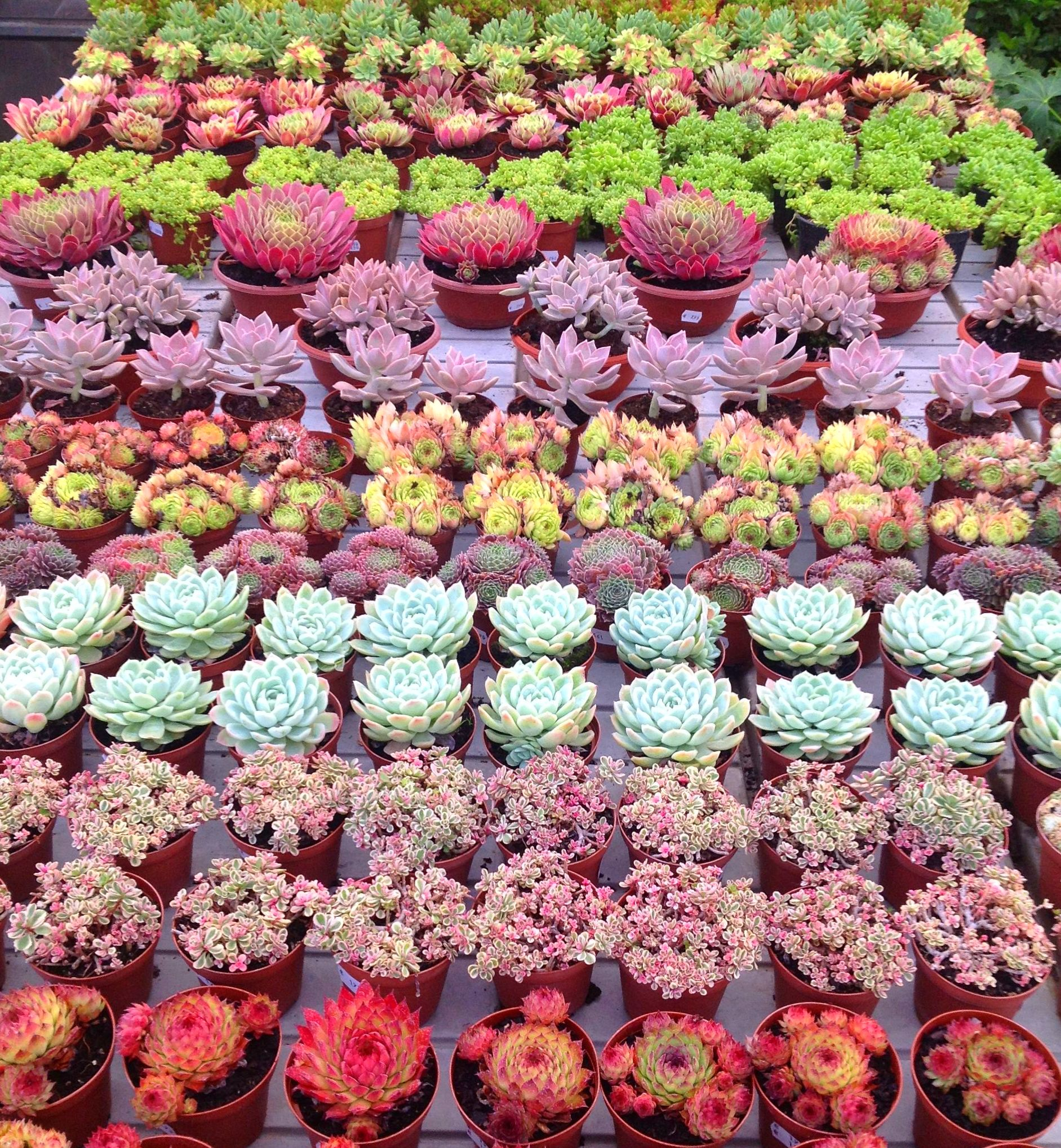 Foto 11 de Centros de jardinería en Valdemorillo   Viveros Cidoncha