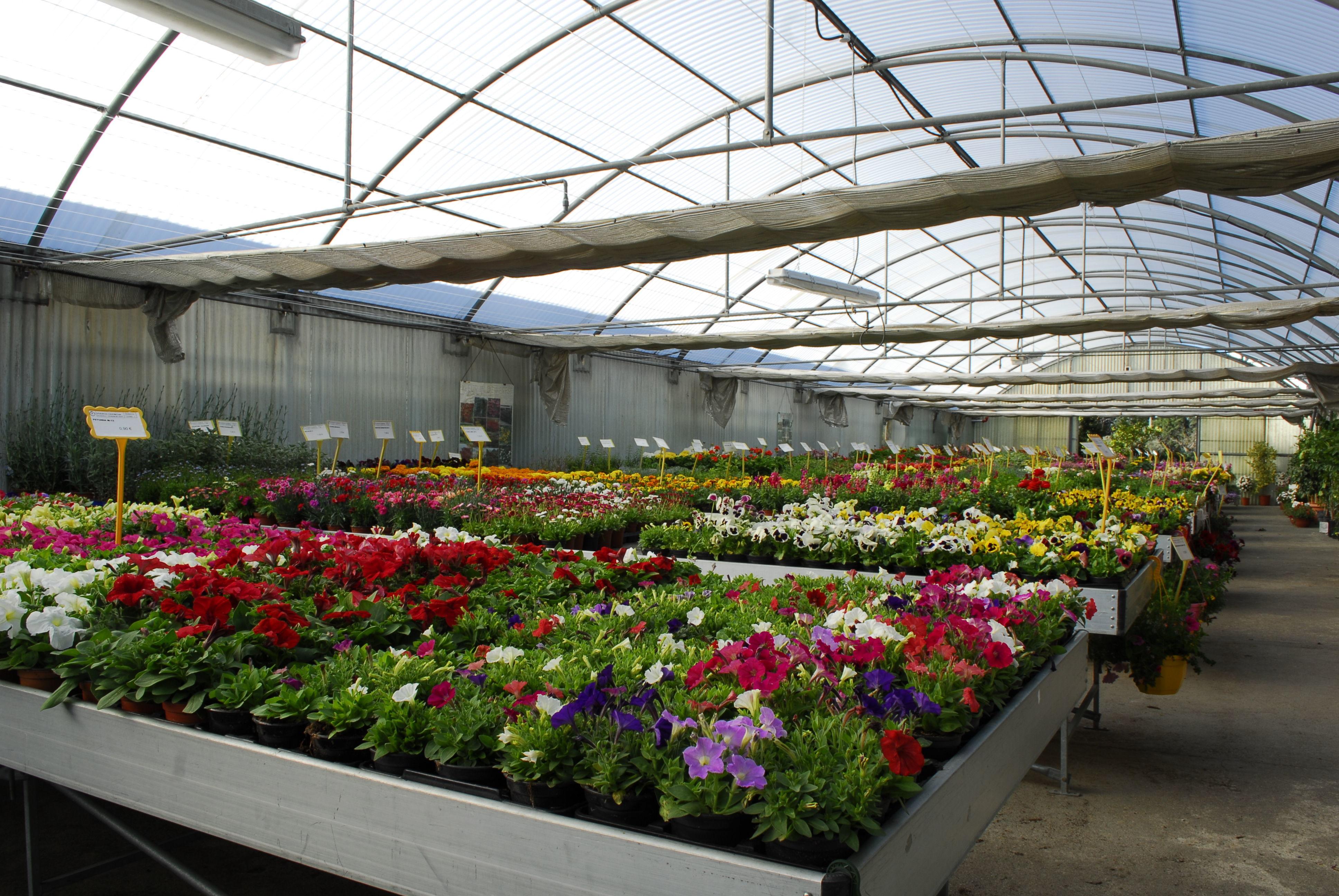 Foto 3 de Centros de jardinería en Valdemorillo | Viveros Cidoncha