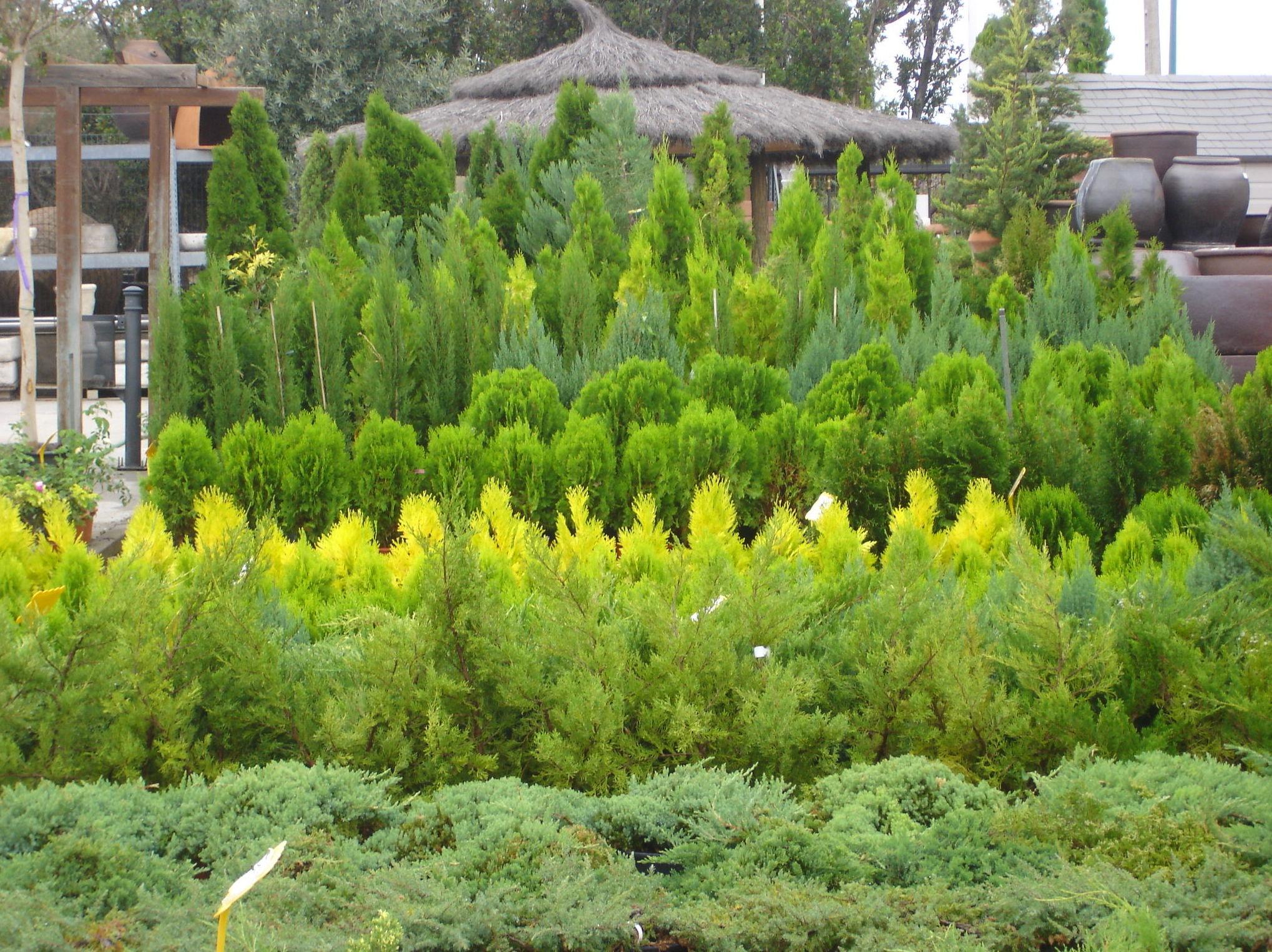 Foto 5 de Centros de jardinería en Valdemorillo | Viveros Cidoncha