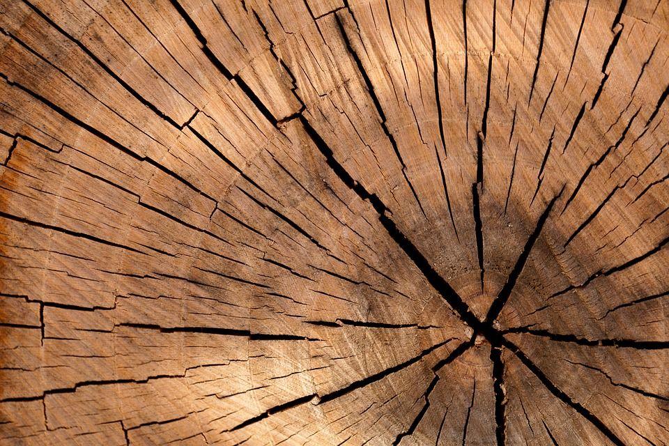 Asesoramiento sobre el tipo de madera