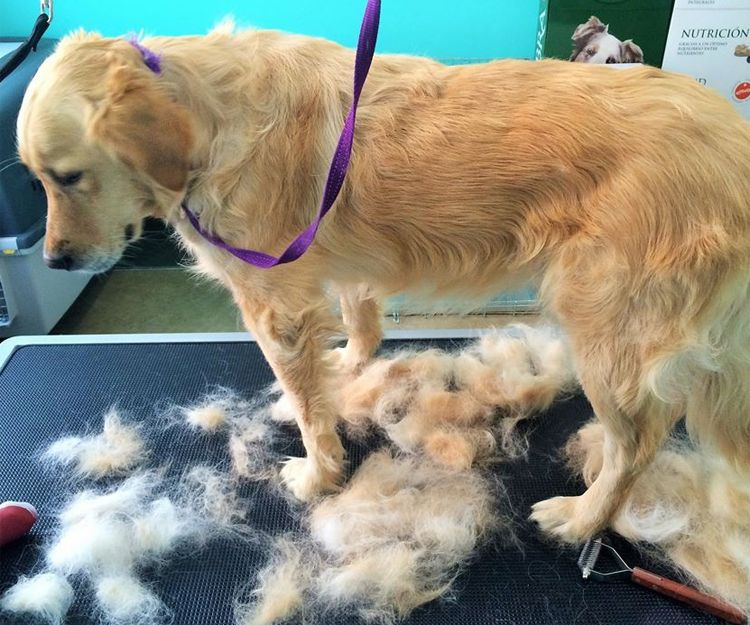Arreglo de nuestros perros