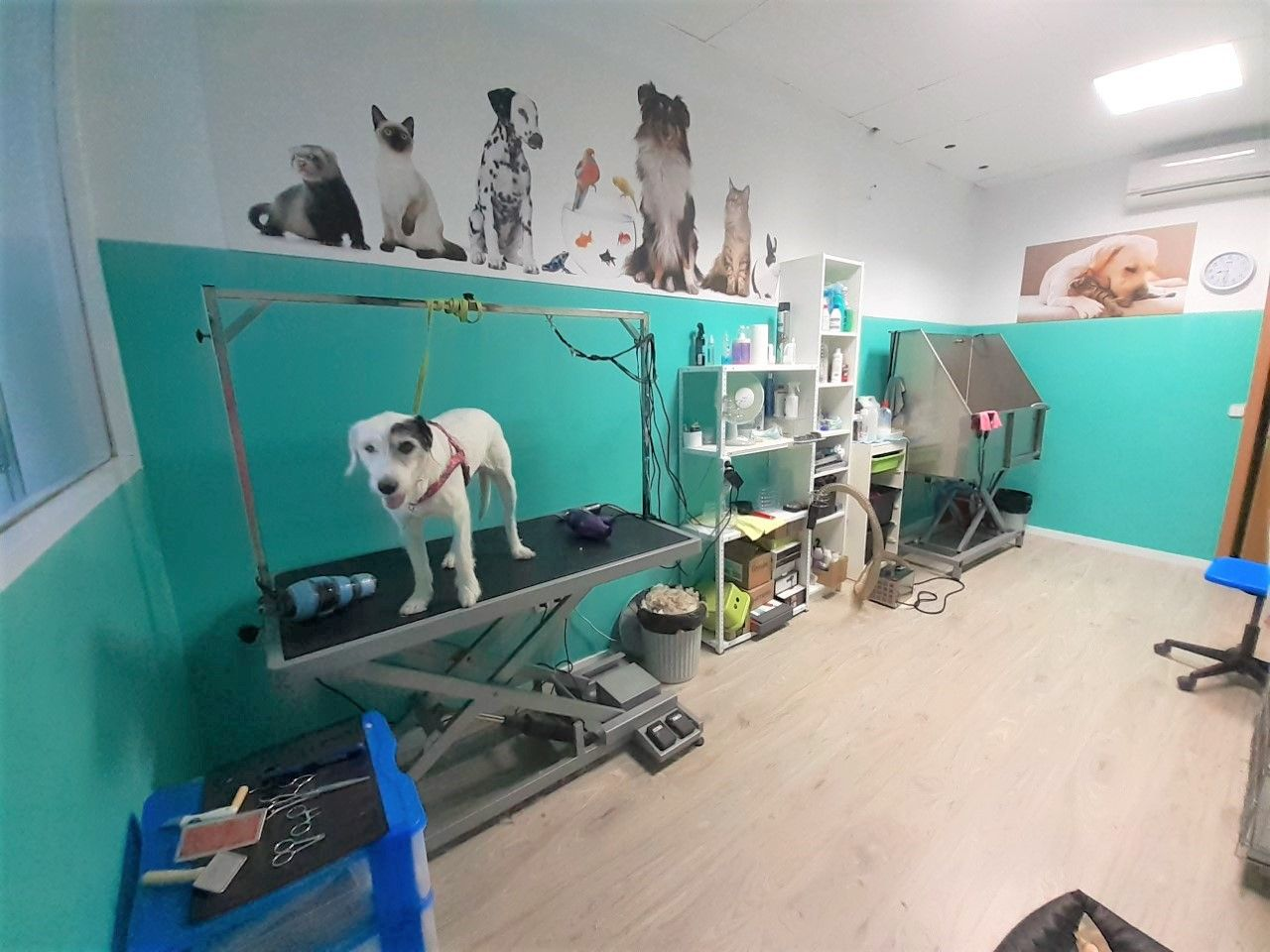 Foto 3 de Tienda de mascotas en Leganés en Leganés | Narval Mascotas