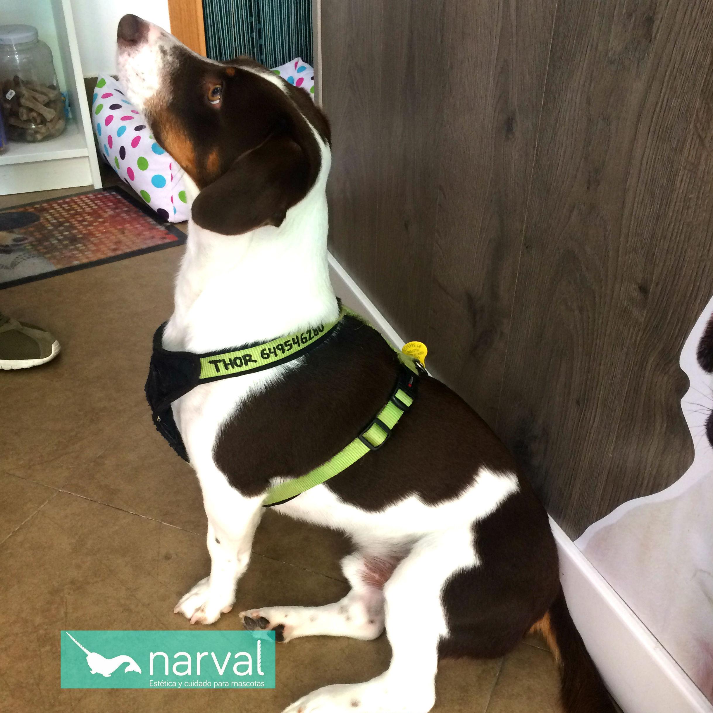arnes collar personalizado perro