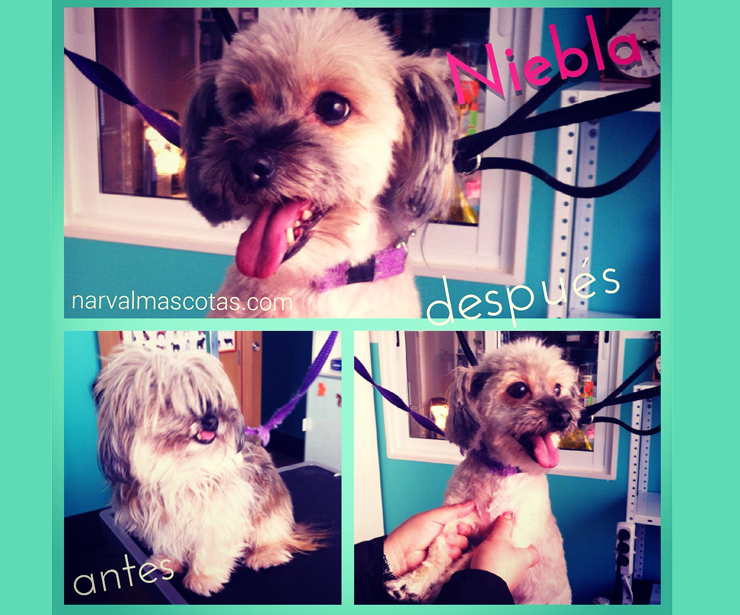 Narval Mascotas peluquería canina |Corte mestizo