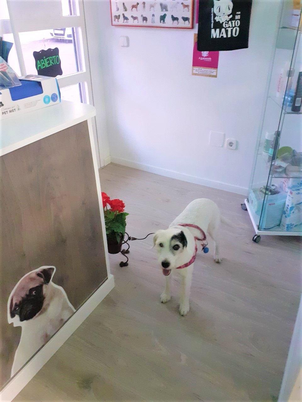 Foto 4 de Tienda de mascotas en Leganés en Leganés | Narval Mascotas