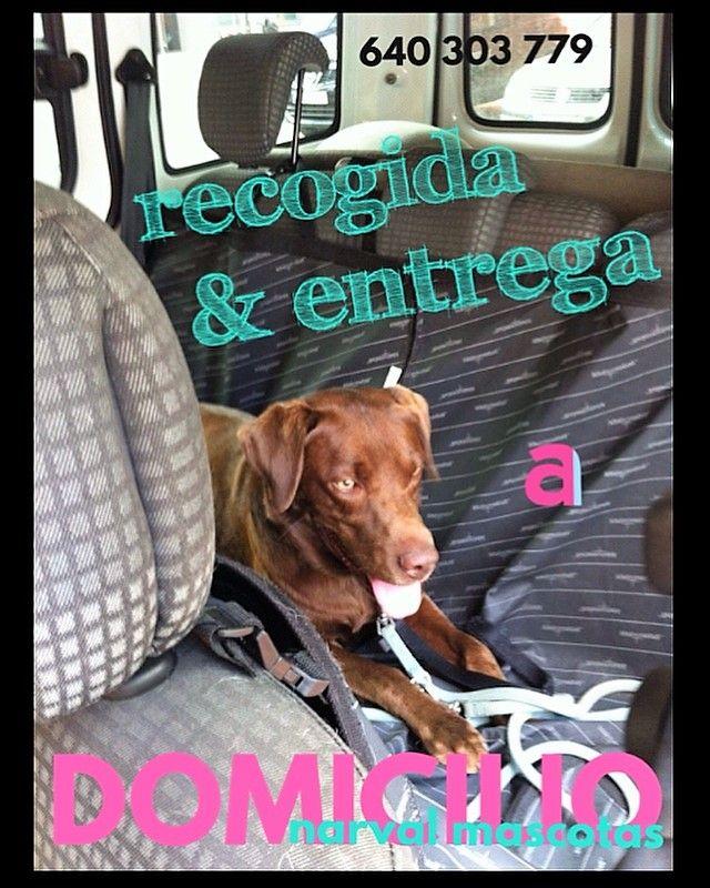 Foto 2 de Tienda de mascotas en Leganés en Leganés | Narval Mascotas