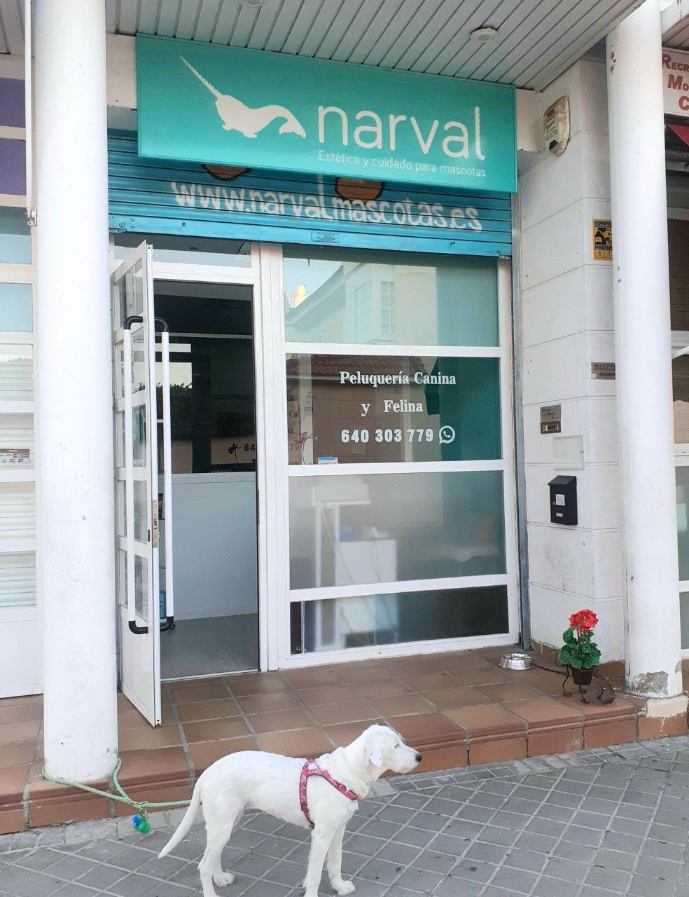 Foto 7 de Tienda de mascotas en Leganés en Leganés   Narval Mascotas
