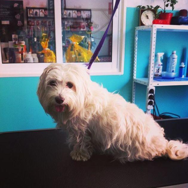 Tienda de mascotas en Leganés