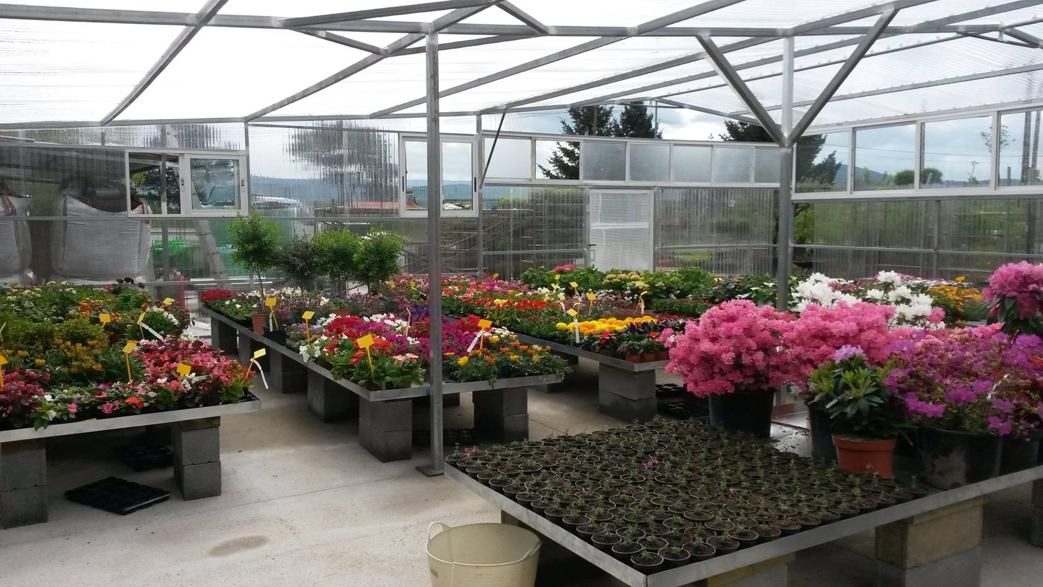 Venta de flores en Monforte de Lemos