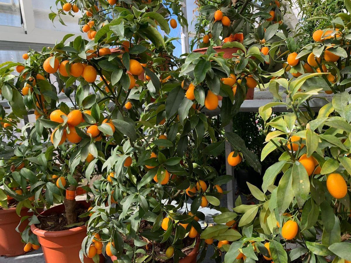 Servicio de vivero: Centro de jardinería de A Campiña de Lemos