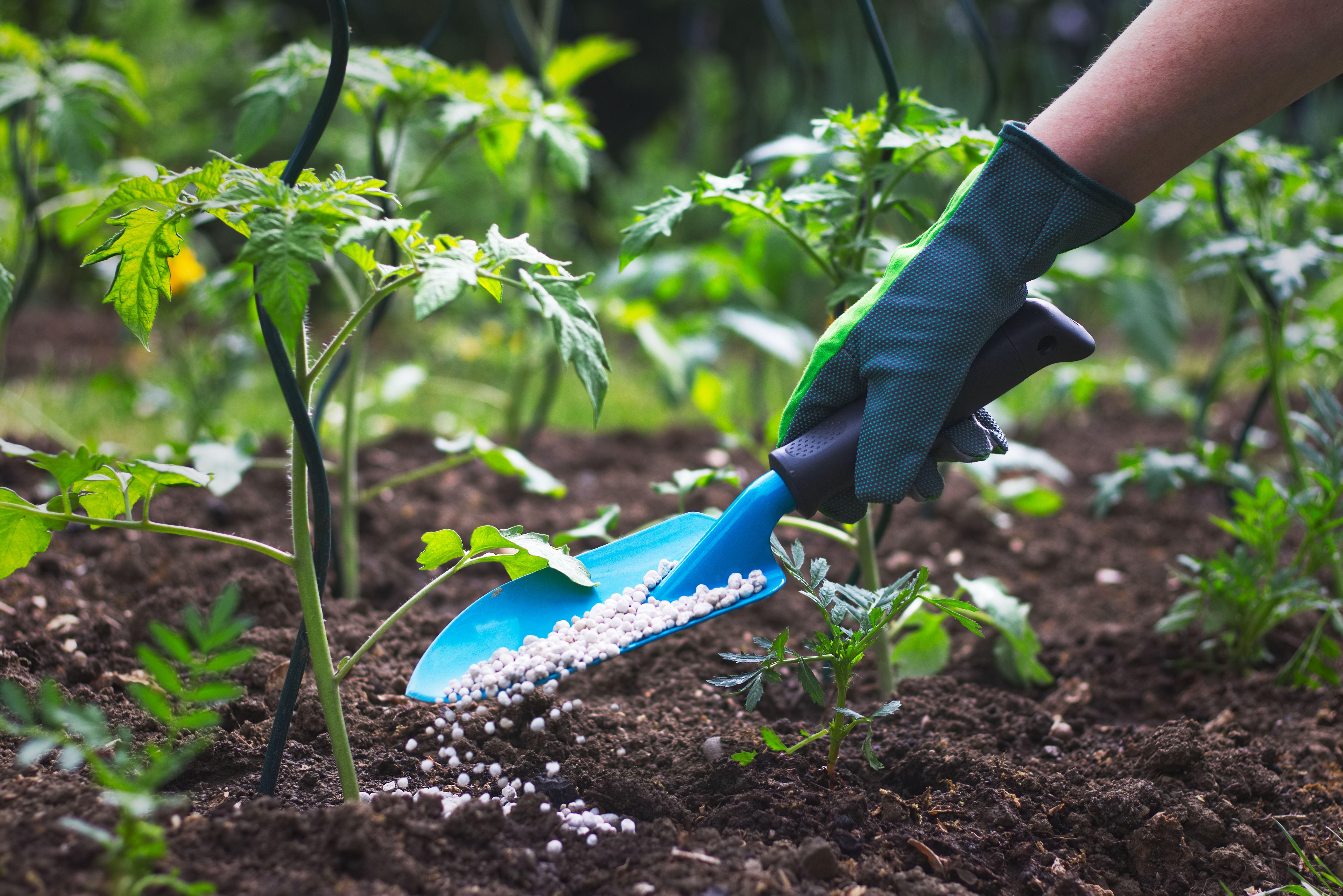 Tratamientos fitosanitarios: Centro de jardinería de A Campiña de Lemos