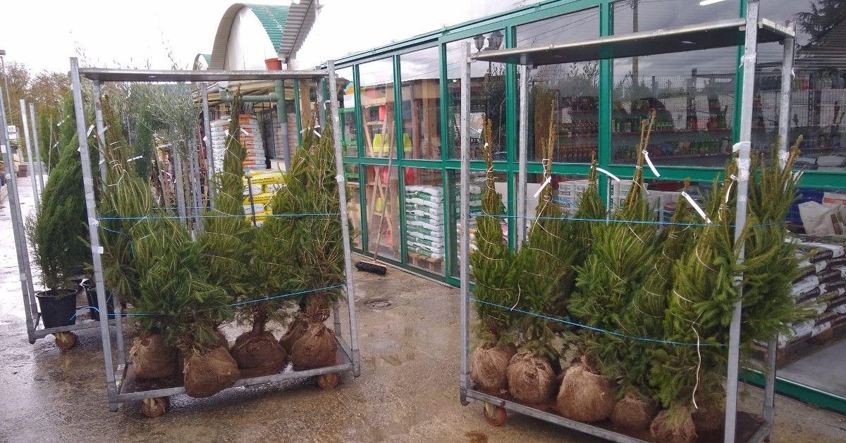 Centros de jardinería en Monforte de Lemos