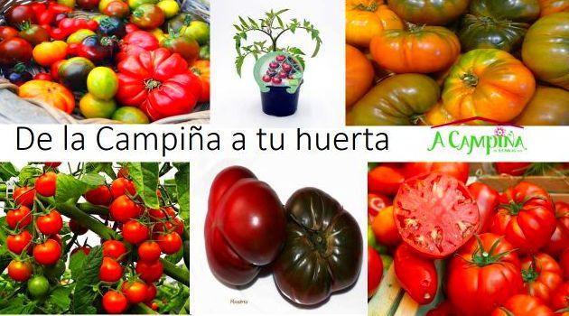 Empezamos la campaña de huerto con nuestros tomates