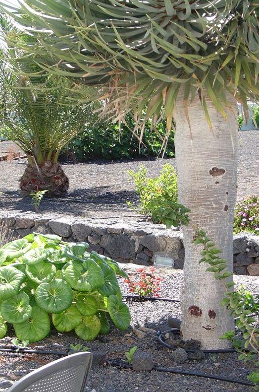 Finca Isabel, Mozaga, Lanzarote (Las Palmas)