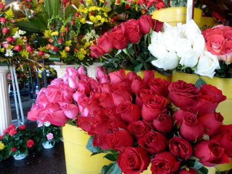 Rosas varios colores