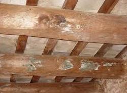 ¿Qué son las termitas?