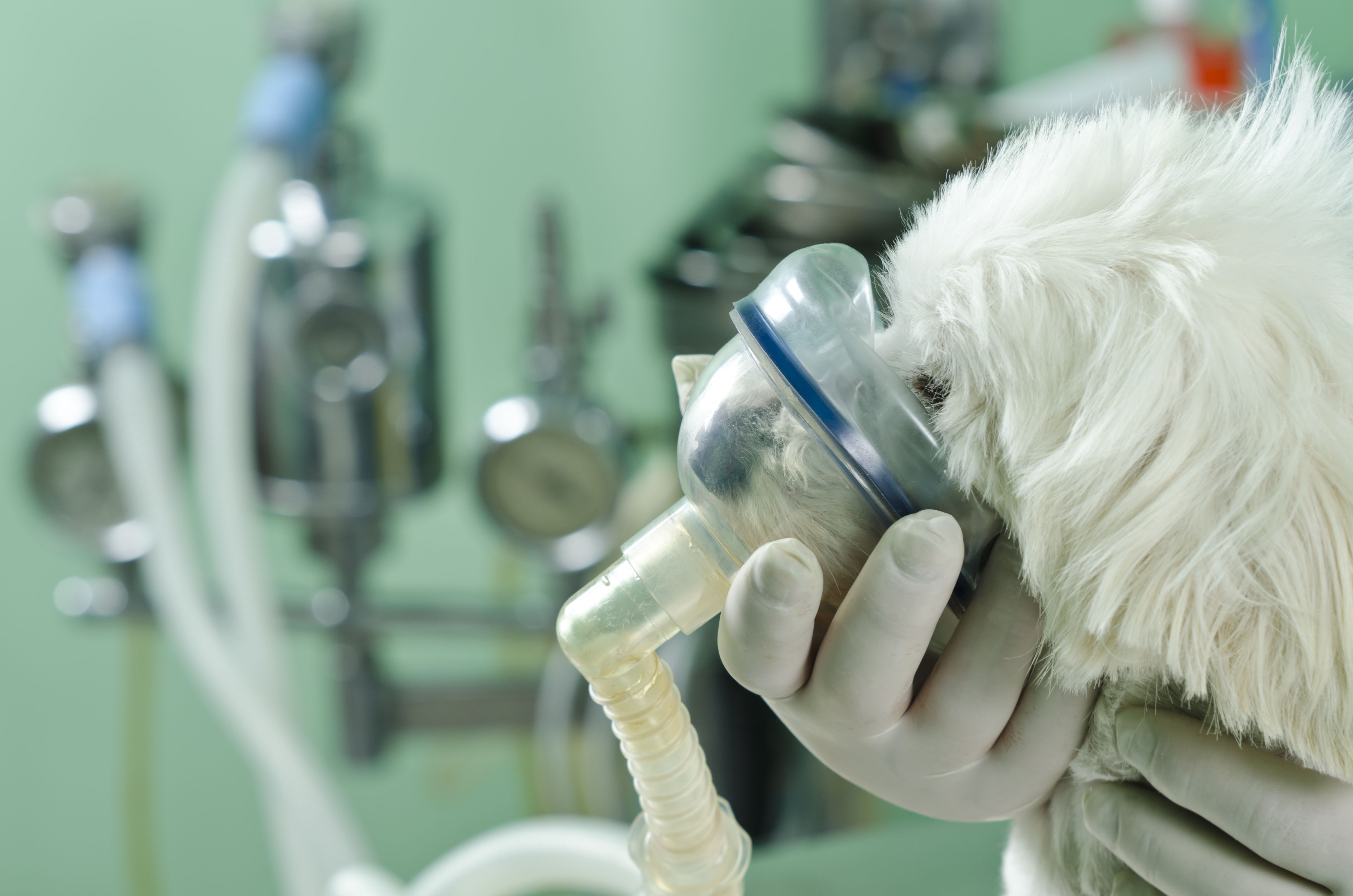Cirugía y medicina interna de mascotas en Girona