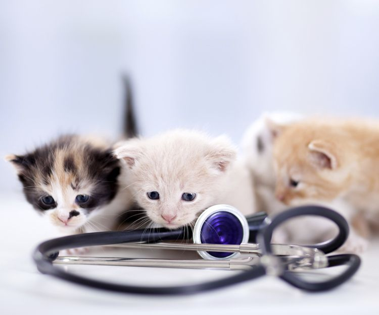 Prevención de enfermedades en mascotas