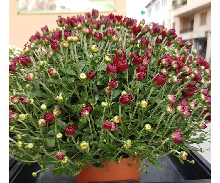 Plantas de exterior en Palma de Mallorca